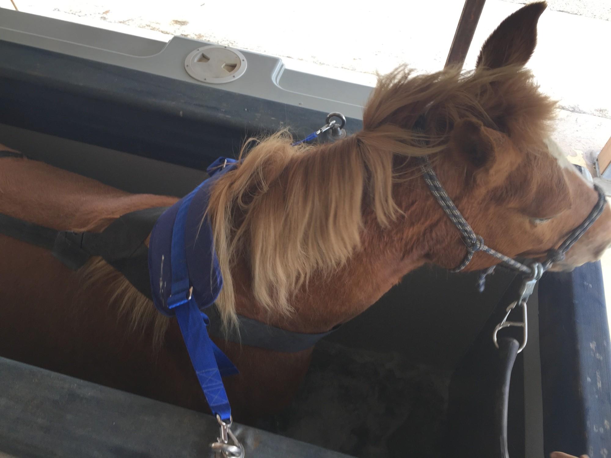 Soins pour chevaux en aquitaine