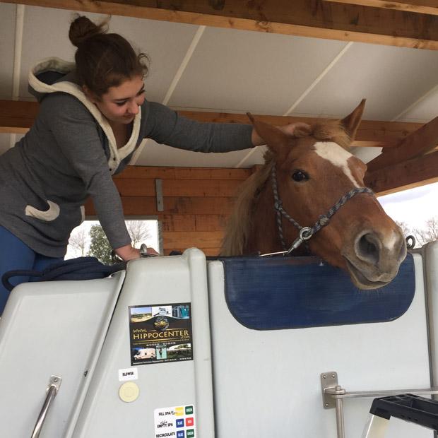 Balnéothérapie pour chevaux en aquitaine - Alix