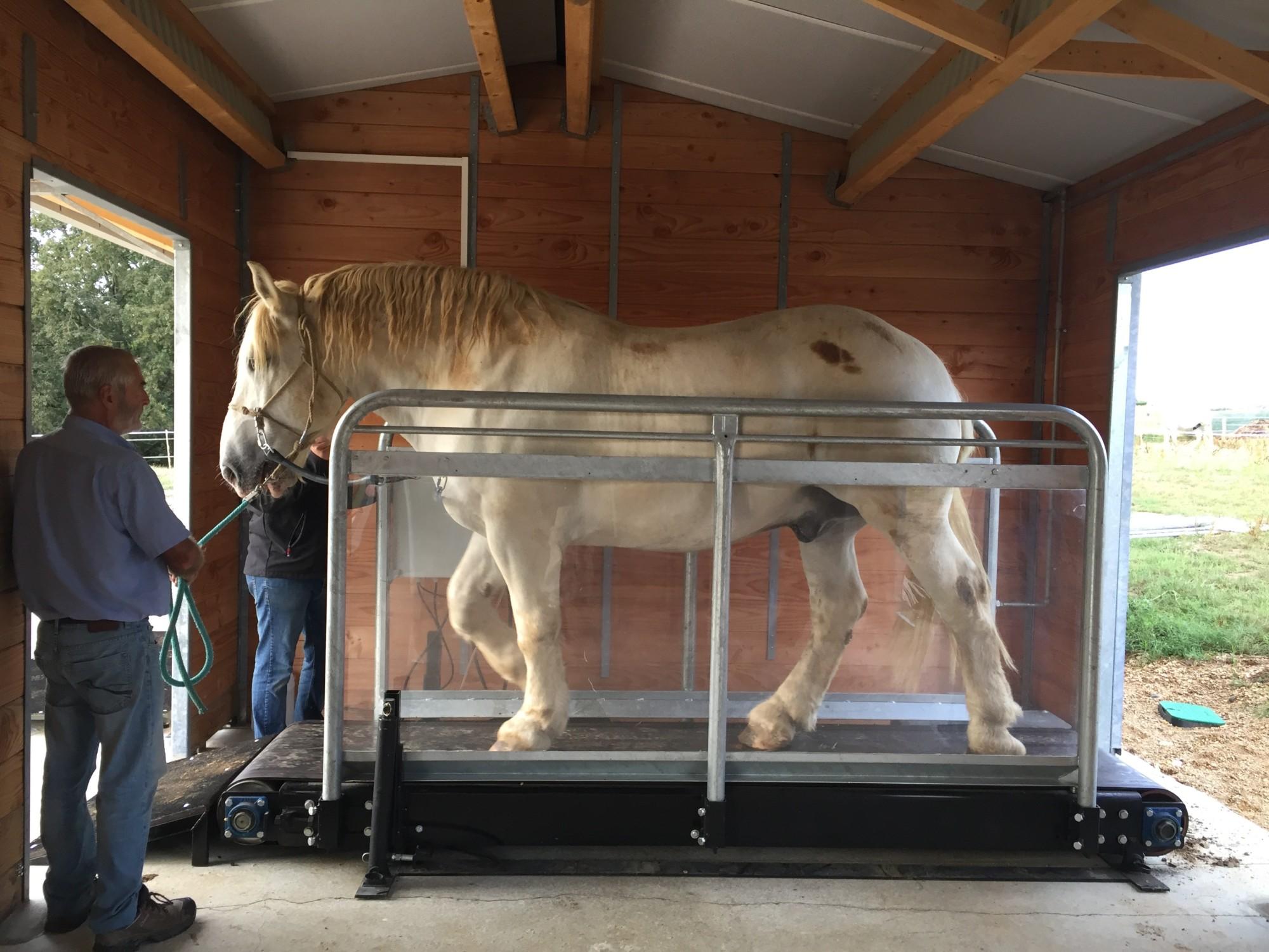 tapis roulant pour r 233 cup 233 ration d 233 crassage pour cheval les 233 curies d alix